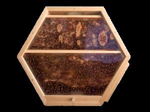 1 hex hive